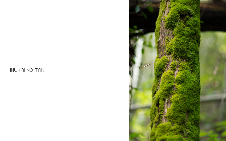 鹿児島県霧島市「犬飼滝」 木と苔 inukainotaki7
