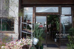 多肉植物・観葉植物と生活雑貨の「Araheam (アラヘアム)」鹿児島県鹿屋市