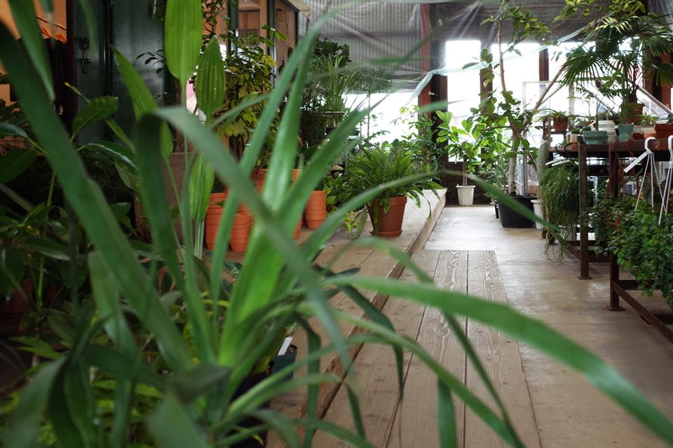 店内の観葉植物と花器「Araheam (アラヘアム)」鹿児島県鹿屋市