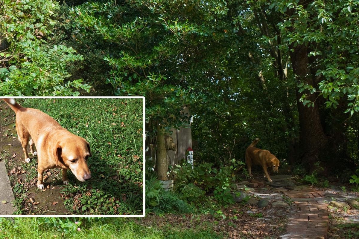 美山のカフェ「喫茶 風の丘」犬がお出迎え 鹿児島県日置市