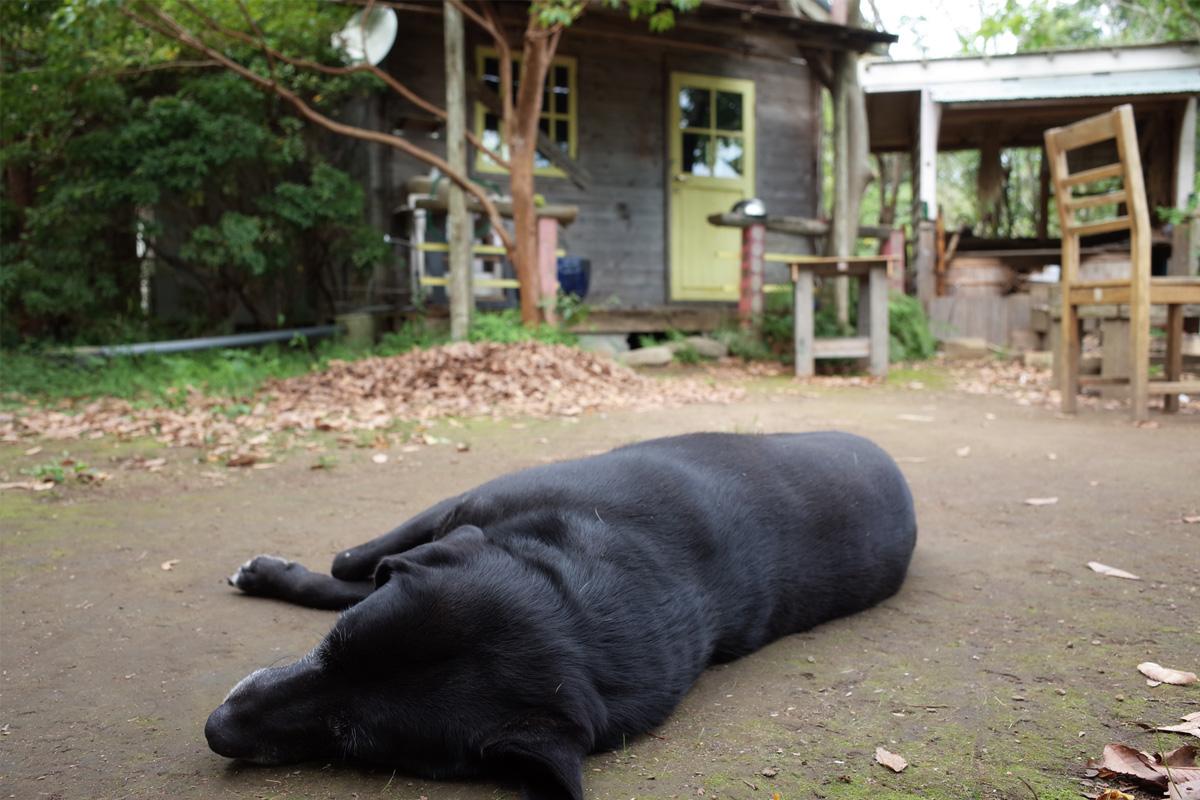 美山のカフェ「喫茶 風の丘」庭の長閑な風景 鹿児島県日置市