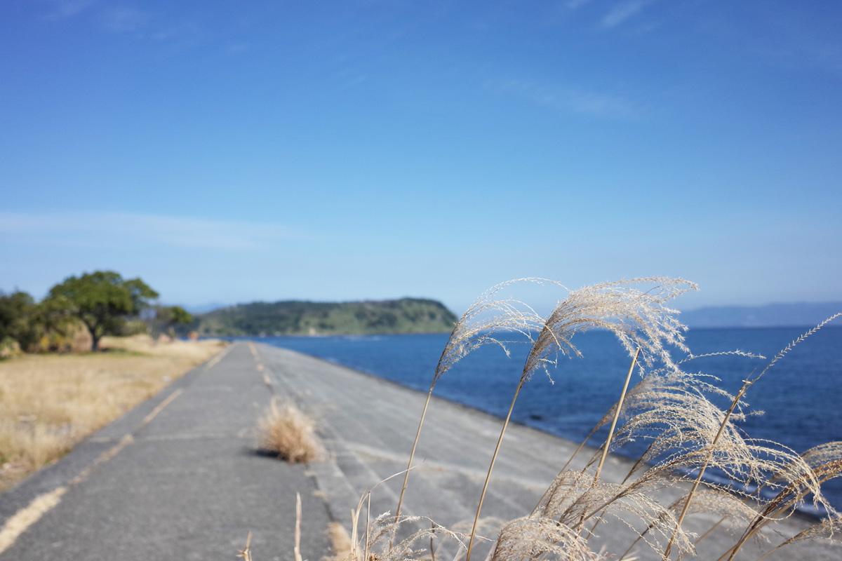 すすきと海-知林ヶ島/指宿市