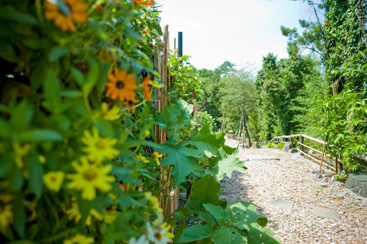 鹿児島県阿久根市の農園ガーデン「ひみつの楽園」